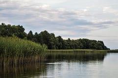 Juncos no lago em um dia de verão Fotos de Stock Royalty Free