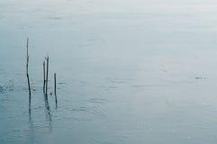 Juncos no reservatório gelado Imagem de Stock