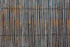 Juncos secos envelhecidos limitados com fio de metal Foto de Stock Royalty Free