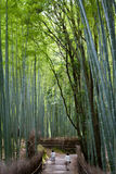 June 2012: Arashiyama,Kyoto, Japan: A bamboo path looking towards the path. Seeing two people walking away from the camera Stock Photos