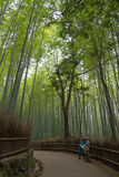 June 2012: Arashiyama,Kyoto, Japan: A bamboo path looking towards the path. June 2012: Arashiyama,Kyoto, Japan: A bamboo path where two people are looking Royalty Free Stock Photos