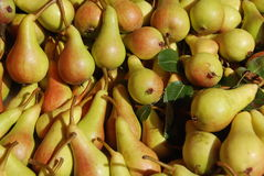 June Beauty pears Royalty Free Stock Image