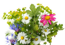 June bouquet. Postcard  with various  plants, isolated on white Stock Photos