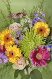 June bouquet of colors Stock Images