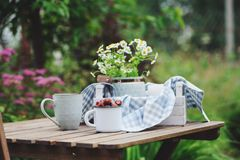 June or july garden scene with fresh picked organic wild strawberry and chamomile flowers. On wooden table outdoor. Summertime still life, healthy country Royalty Free Stock Images