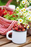 June or july garden scene with fresh picked organic wild strawberry and chamomile flowers on wooden table outdoor. Summertime still life, healthy country Stock Image