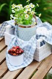 June or july garden scene with fresh picked organic wild strawberry. And chamomile flowers on wooden table outdoor. Summertime still life, healthy country Royalty Free Stock Image