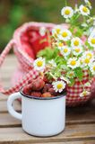June or july garden scene with fresh picked organic wild strawberry. And chamomile flowers on wooden table outdoor. Summertime still life, healthy country Stock Photos