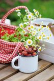 June or july garden scene with fresh picked organic wild strawberry. And chamomile flowers on wooden table outdoor. Summertime still life, healthy country Royalty Free Stock Photo