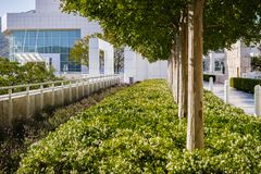 June 8, 2018 Los Angeles / CA / USA - Decorative Myrtle trees and Star Jasmine flowers at Getty Center royalty free stock photo