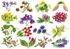 June summer European wild plants and flowers set. Isolated o stock photography