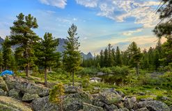 June warm morning in Siberian forest Royalty Free Stock Images