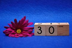 30 June on wooden blocks with a purple daisy. On a blue background stock images