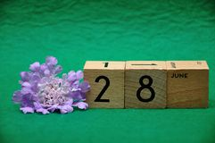 28 June on wooden blocks with a purple flower. On a green background stock photography