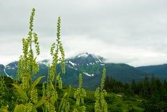 Free Juneau Alaska Mountain View Stock Photos - 3102433