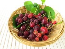 Juneberries in basket Stock Photography