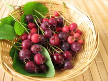 Juneberries in basket Stock Images