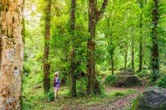 Junge Abenteurerin- oder Reisendfrau, die im Wald steht Stockfotografie