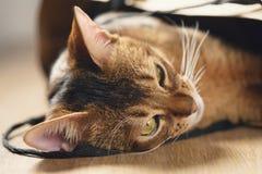 Junge abyssinische Katze in der Tasche auf Tabelle Stockbild