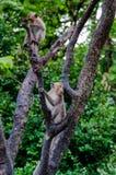 Junge Affen, die auf Baum klettern Lizenzfreie Stockfotos
