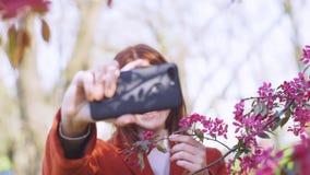 Junge attraktive rothaarige Frau macht ein selfie auf dem Hintergrund von Fr?hlingsblumen der Kirsche oder der Kirschbl?te-Bl?ten stock video footage