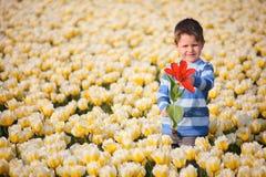 Junge auf dem Tulpe-Gebiet stockfoto