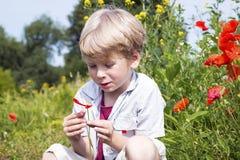 Junge auf einem Mohnblumengebiet, Frühjahr Stockfoto