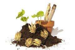 Junge Ausschnitte des Samens und der Kapseln mit Topf und Bambus Lizenzfreie Stockfotografie
