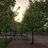 Junge Bäume lizenzfreies stockfoto