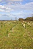 Junge Bäume in den Yorkshire-Wolds Lizenzfreies Stockbild