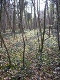 Junge Bäume in einem kalten Waldland Lizenzfreies Stockbild