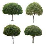 Junge Bäume getrennt auf Weiß Lizenzfreies Stockbild