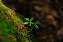 Junge Bäume mit Sonnenlicht lizenzfreie stockfotografie