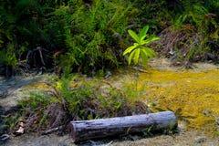 Junge Bäume werden aus Mangel an Wasser sterben Lizenzfreie Stockfotografie