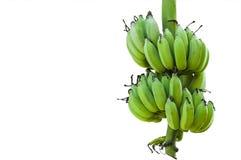 Junge Banane lokalisiert auf Weiß Lizenzfreies Stockbild