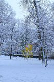 Junge Birke unter den älteren Bäumen Stockfotografie