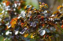 Junge Blätter von stiegen Stockfotos