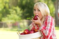 Junge blonde Frau, die einen Korb der Äpfel anhält Stockbilder