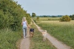 Junge blonde Frau, die weg von der Kamera mit ihren zwei Hunden geht Lizenzfreie Stockbilder