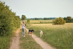Junge blonde Frau, die weg von der Kamera mit ihren zwei Hunden geht Lizenzfreie Stockfotografie