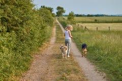 Junge blonde Frau, die weg von der Kamera mit ihren zwei Hunden geht Stockbild