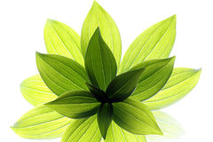 Junge Blätter Stockfotografie