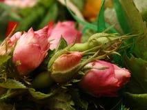 Junge Blumen stockbild