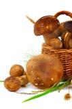 Junge Boletus-Pilze Stockbilder