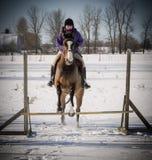 Junge Dame, die ihr Pferd im Winter springt Stockfotografie