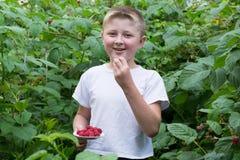 Junge in den Büschen von Himbeeren stockfotografie