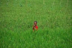 Junge, der auf den Reisgebieten in Indonesien spielt Lizenzfreie Stockfotografie