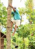 Junge, der auf palmtree klettert Lizenzfreie Stockfotos