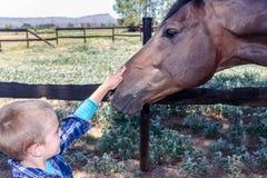 Junge, der braunen Pferdekopfabschluß oben in der Koppel streichelt stockfoto