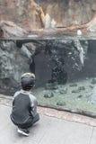 Junge, der das Aquarium genießt stockfotografie